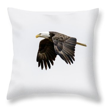 Bald Eagle 3 Throw Pillow by David Lester