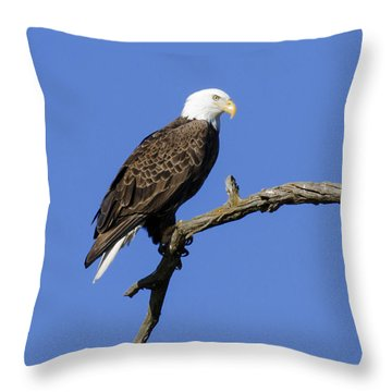 Bald Eagle 4 Throw Pillow by David Lester