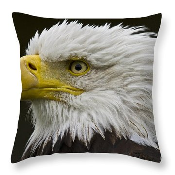Bald Eagle - 7 Throw Pillow