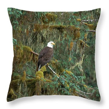 Bald Eagle Throw Pillow by Art Wolfe