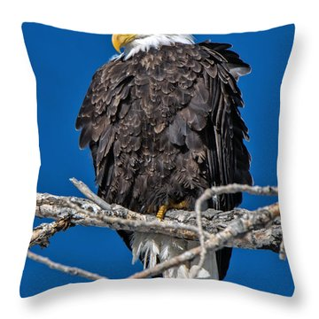 Bald Eagle At Cherry Creek State Park Throw Pillow