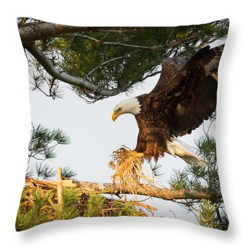 Bald Eagle Building Nest Throw Pillow