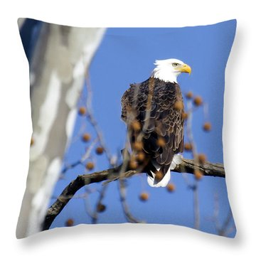 Bald Eagle Throw Pillow by David Lester