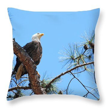 Bald Eagle Throw Pillow by Geraldine DeBoer
