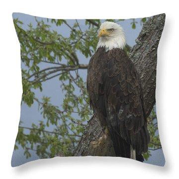 Bald Eagle I Throw Pillow