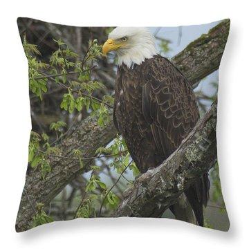 Bald Eagle II Throw Pillow