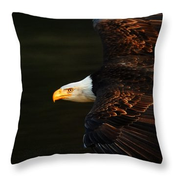 Bald Eagle In Flight Throw Pillow by Bob Christopher