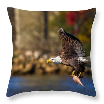 Bald Eagle In Flight Over Water Carrying A Fish Throw Pillow