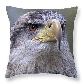 Bald Eagle - Juvenile Throw Pillow