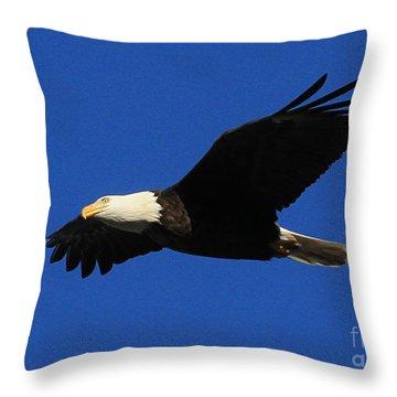 Throw Pillow featuring the photograph Bald Eagle Lock 14 by Paula Guttilla