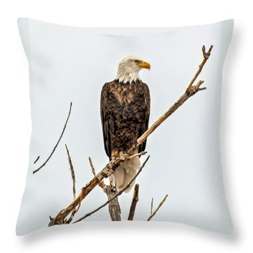 Bald Eagle On A Branch Throw Pillow