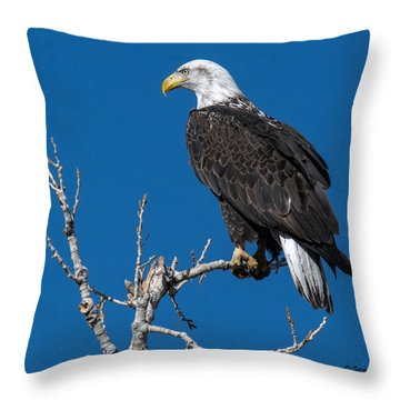 Bald Eagle On Cottonwood Tree Throw Pillow