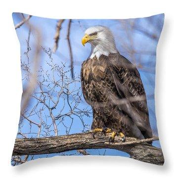 Bald Eagle On The Iowa River Throw Pillow