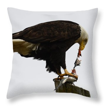 Bald Eagle Part Of Nature Throw Pillow by Bob Christopher