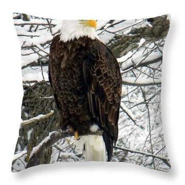 Throw Pillow featuring the photograph Bald Eagle by Penny Meyers