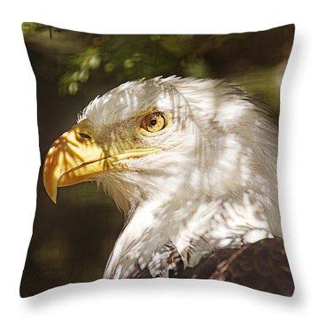 Bald Eagle Portrait  Throw Pillow by Brian Cross