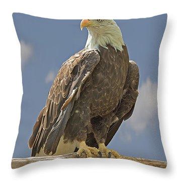 Bald Eagle Portrait Throw Pillow