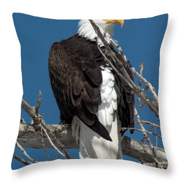 Bald Eagle Putting On The Ritz Throw Pillow
