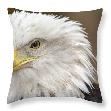 Throw Pillow featuring the photograph Bald Eagle by Robert  Aycock