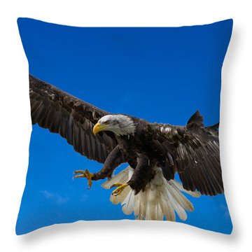 Bald Eagle Throw Pillow by Scott Carruthers