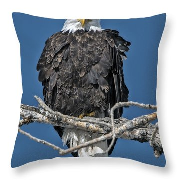 Bald Eagle Stare Down Throw Pillow