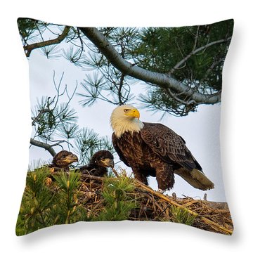 Bald Eagle With Eaglets  Throw Pillow