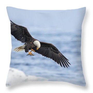 Bald Eagle With Prey Throw Pillow by Daniel Behm
