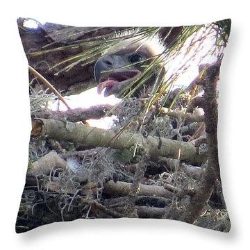 Bald Eagles Chick Throw Pillow by Zina Stromberg