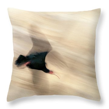Bald Ibis Throw Pillow