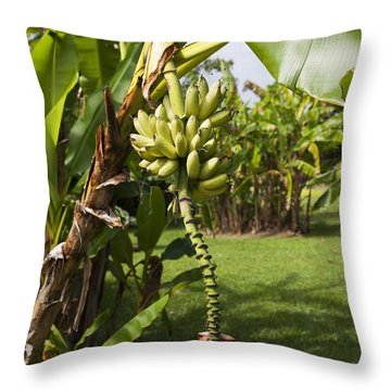 Banana Tree Throw Pillow by Jenna Szerlag