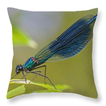 Banded Demoiselle Damselfy Male Throw Pillow