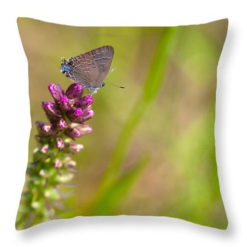 Banded Hairstreak Butterfly Throw Pillow