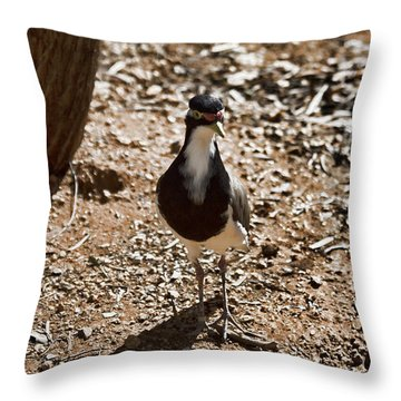 Banded Lapwing Throw Pillow by Douglas Barnard