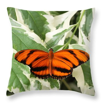 Banded Orange Longwing Butterfly Throw Pillow by Judy Whitton