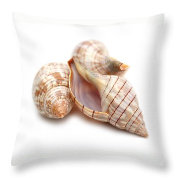 Banded Tulip Seashells Macro Throw Pillow by Jennie Marie Schell