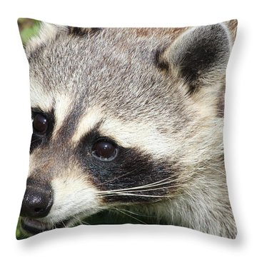Bandit Throw Pillow by Tiffany Erdman