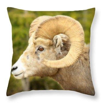Banff Bighorn Throw Pillow by Stephen Stookey