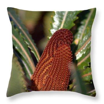 Throw Pillow featuring the photograph Banksia by Miroslava Jurcik