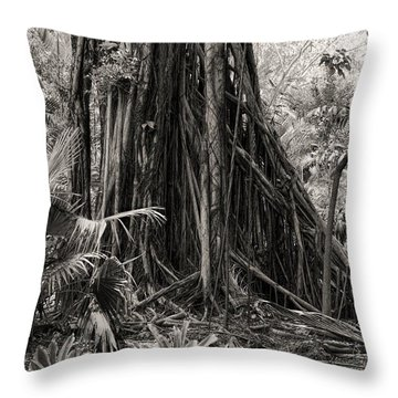 Strangler Fig And Cypress Tree Throw Pillow