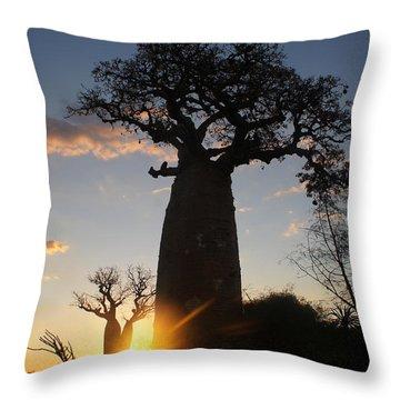 baobab from Madagascar 6 Throw Pillow