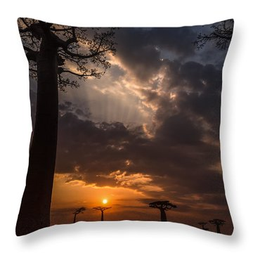 Baobab Sunrays Throw Pillow