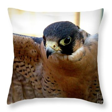 Barbary Falcon Wings Stretched Throw Pillow