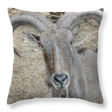 Throw Pillow featuring the photograph Barbary Sheep by Dyle   Warren