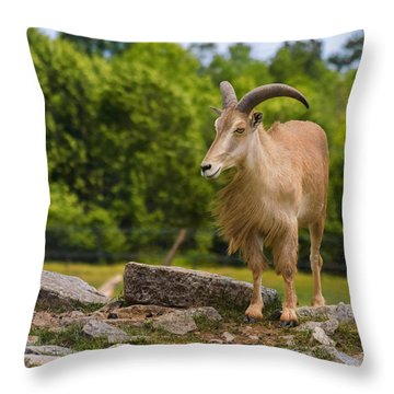 Barbary Sheep Throw Pillow