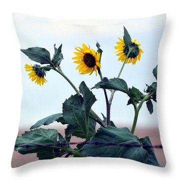Throw Pillow featuring the photograph Barbed And Flowered  by Clarice  Lakota