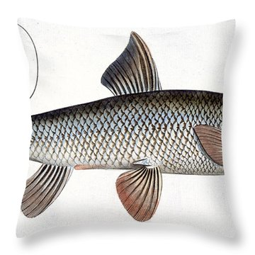 Barbel Throw Pillow by Andreas Ludwig Kruger