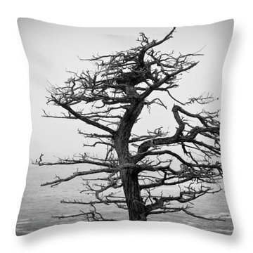 Bare Cypress Throw Pillow by Melinda Ledsome