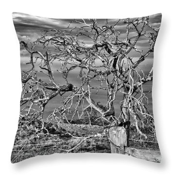 Bare Tree In Hana Throw Pillow by Loriannah Hespe