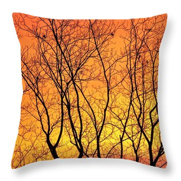 Bare Winter Sunrise  Throw Pillow