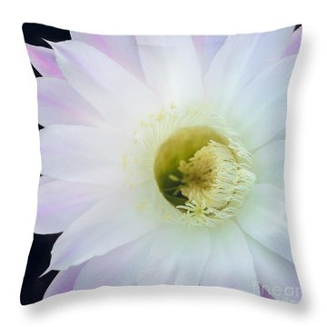 Barely Pink II Throw Pillow